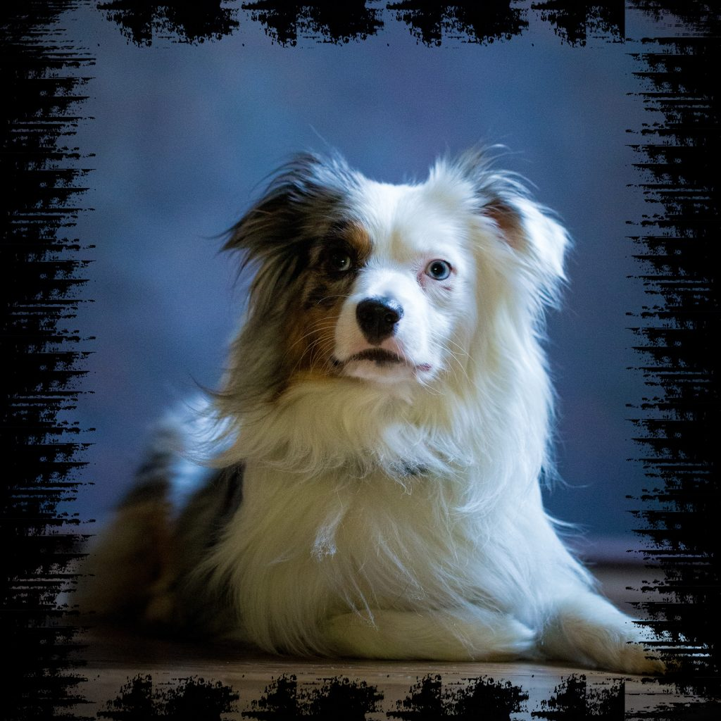 Picture of Dakota