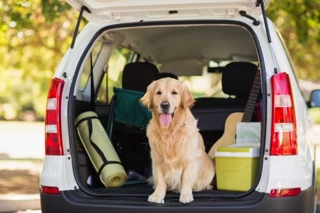Preparing the van for traveling with Bandit.